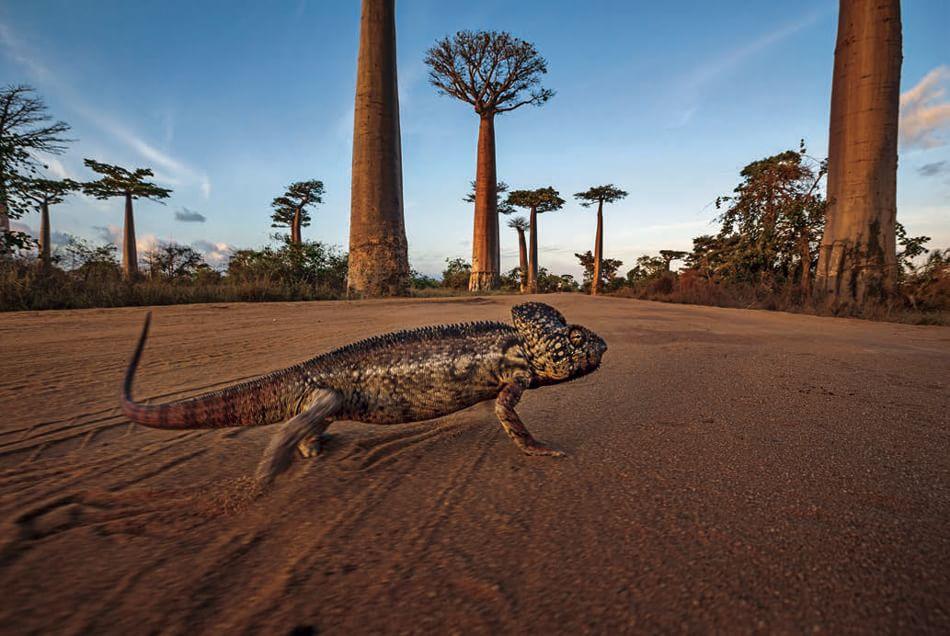 Madagascar viaggi tour vacanza