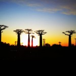 Allée des Baobabs al tramonto