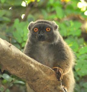Madagascar viaggio tour parchi 6