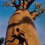 Baobab sulla costa ovest
