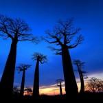 Allée des Baobabs presso Morondava