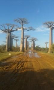 Madagascar tour viaggi vacanze